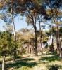Bosc Joaquim Folguera